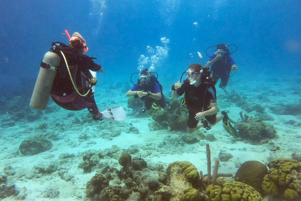 Dive diva Bonaire - padi open water diving course